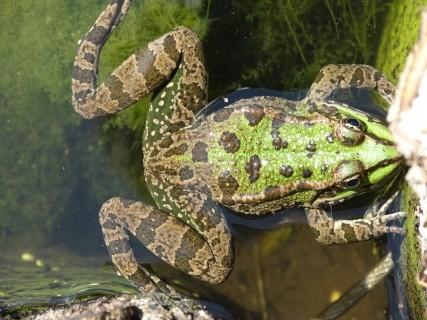 Ces animaux qui dévorent les insectes et les larves dommageables
