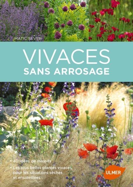 Vivaces sans arrosage : Les plus belles plantes vivaces pour les situations sèches et ensoleillées