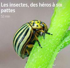 Les insectes des héros à six pattes