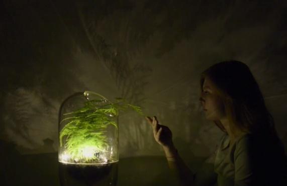 Et si on transformait les plantes en batteries ?