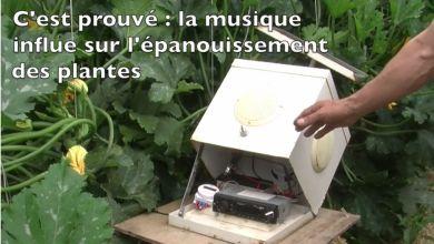 Le chant des protéines végétales au secours des courgettes de Gilles Josuan.