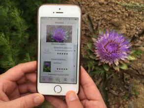 PlantNet vous aide à identifier les plantes sur votre smatphone