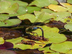 Déclin massif de populations d' insectes constaté en Allemagne  !