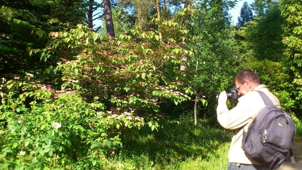 Photographier le printemps à l'Arboretum des Grandes Bruyères