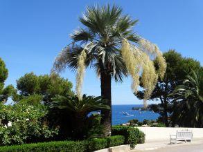 Les plus beaux jardins d'Europe à revoir en replay sur France 3 jusqu'au 22 Mai