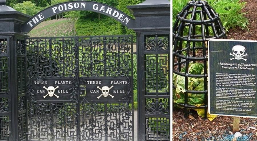 Attention Jardin empoisonné !