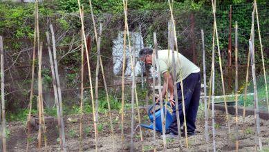 Succès du jardinage pendant le confinement: plants et semences se font rares