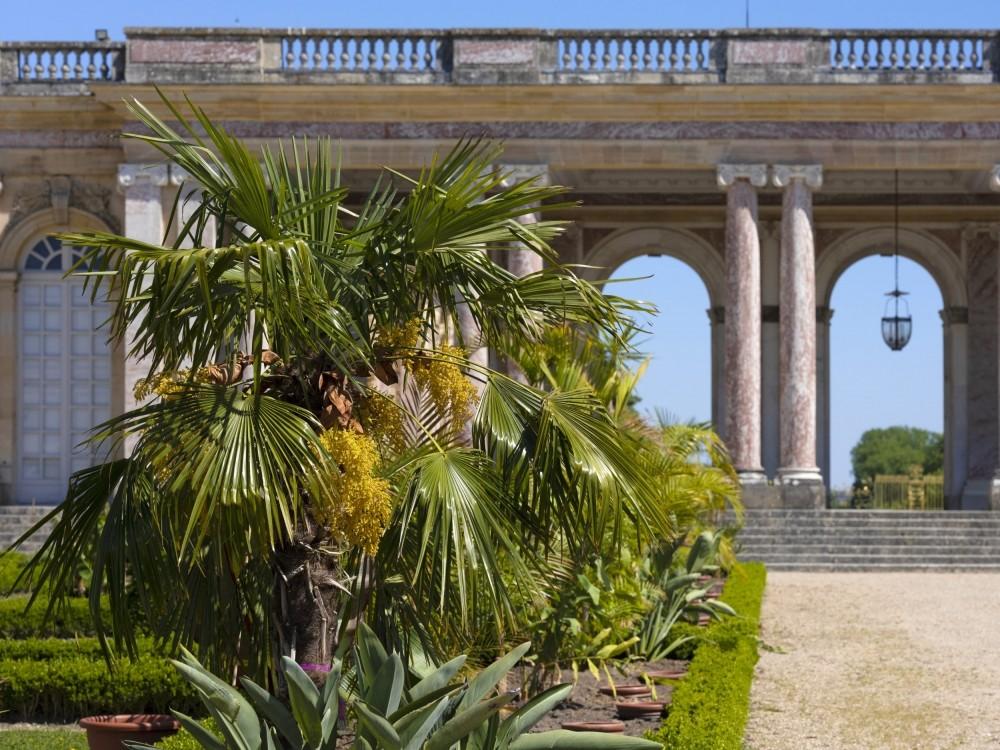 Un jardin inspiré de l'afrique au grand trianon à Versailles !
