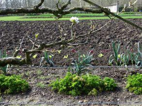 La SNHF lance son enquête sur les pratiques actuelles des jardiniers.