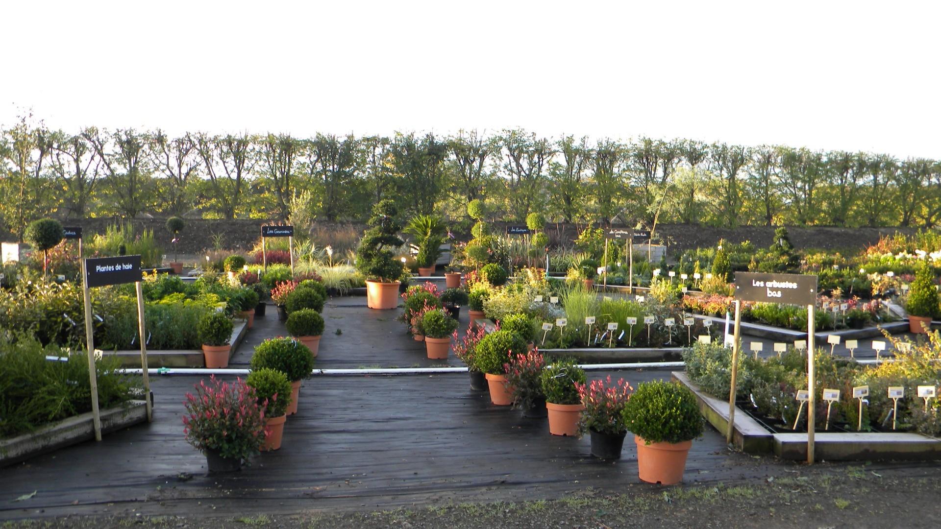 Végétaux aménagements extérieurs