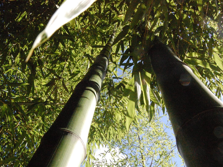 Bambous Production : Bambouseraie de 10 hectares, Culture de Bambous, Ventes, Conseils