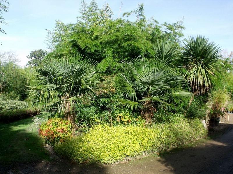 Bambouseraie des 7 sources