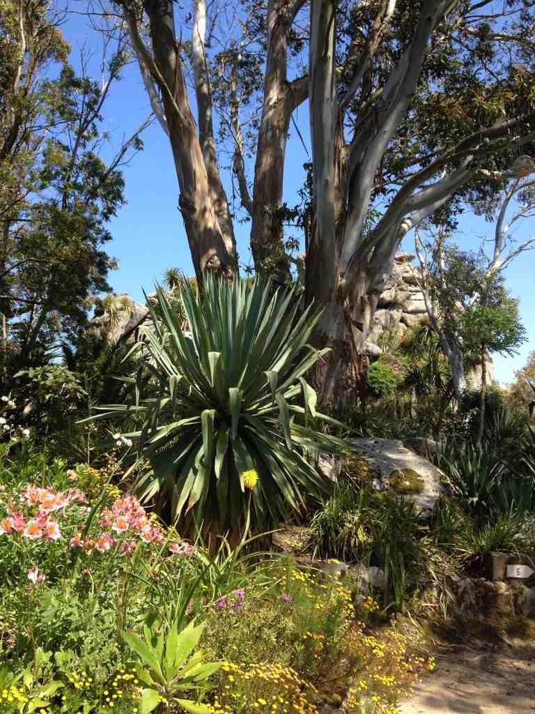 Le Jardin exotique de Roscoff - Beaux jardins et Potagers