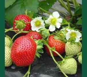 Entretien des Fruitiers en Mai