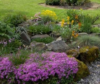 Plantes couvre sol et  paillis
