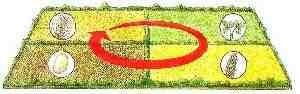 Optez pour la rotation des cultures, pour ménager le sol du potager.