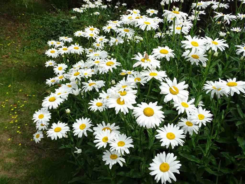 La fleurs du Mois de Septembre