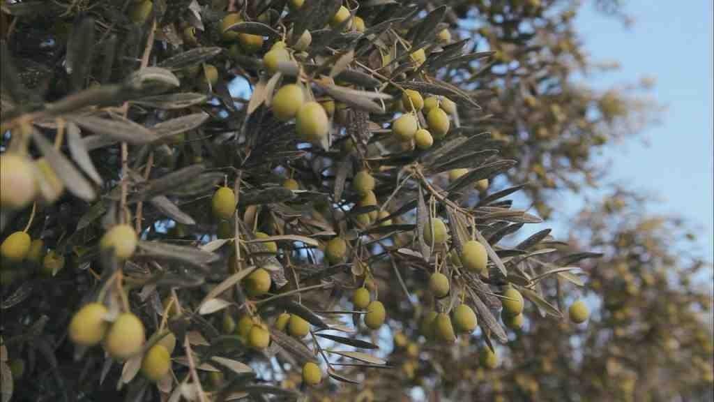 L'arbre du Mois d'Octobre