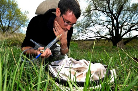 Les insectes utiles aux jardiniers