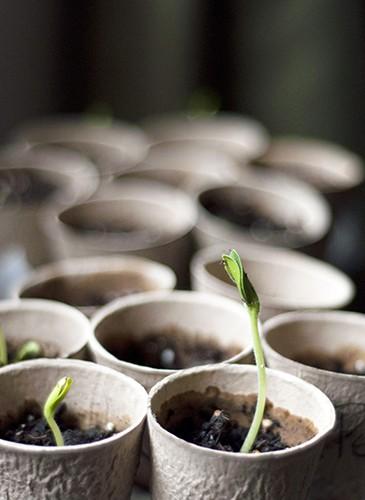 Atelier jardinage : RÉUSSIR TOUS SES SEMIS