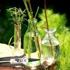 Atelier de jardinage : APPRENDRE À BOUTURER