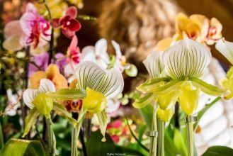 XIIème Festival International des Orchidées à Fontfroide