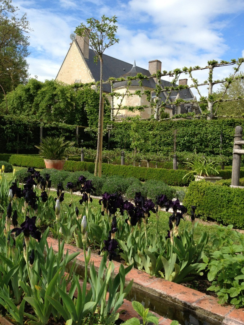 La floraison éphémère des Iris au Domaine de Poulaines