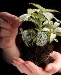 Atelier de jardinage : Entretenir ses plantes vertes