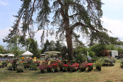 """Fête des Plantes """"Automne, maison et jardin"""""""