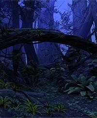 Nocturne en forêt tropicale à Lyon