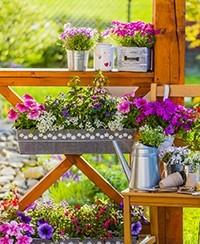 Bien fleurir jardins, terrasses et balcons les mardis ou mercredis du mois de mai