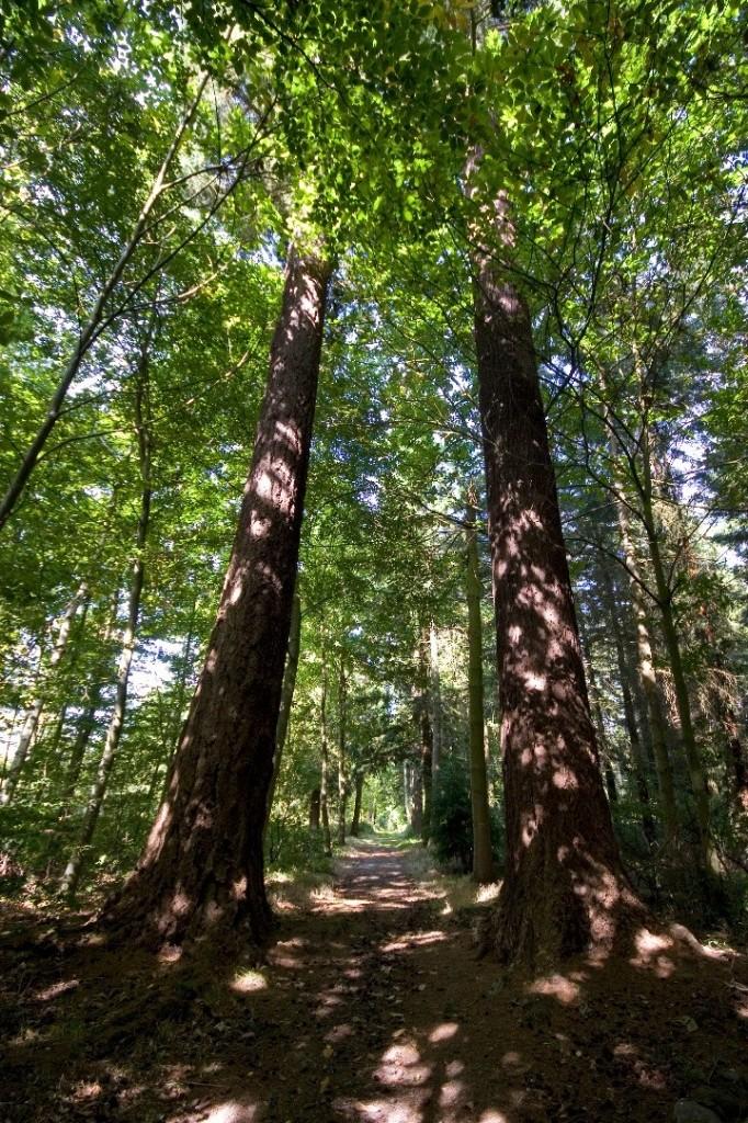 Rencontre avec les arbres