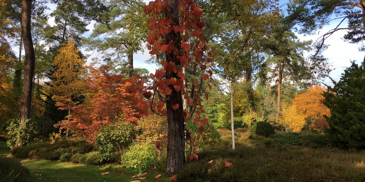 Dimanches d'automne