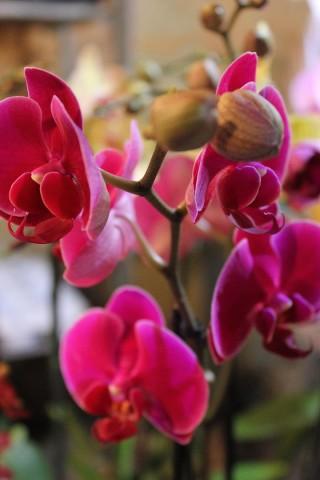 Exposition Vente d'orchidées du monde entier
